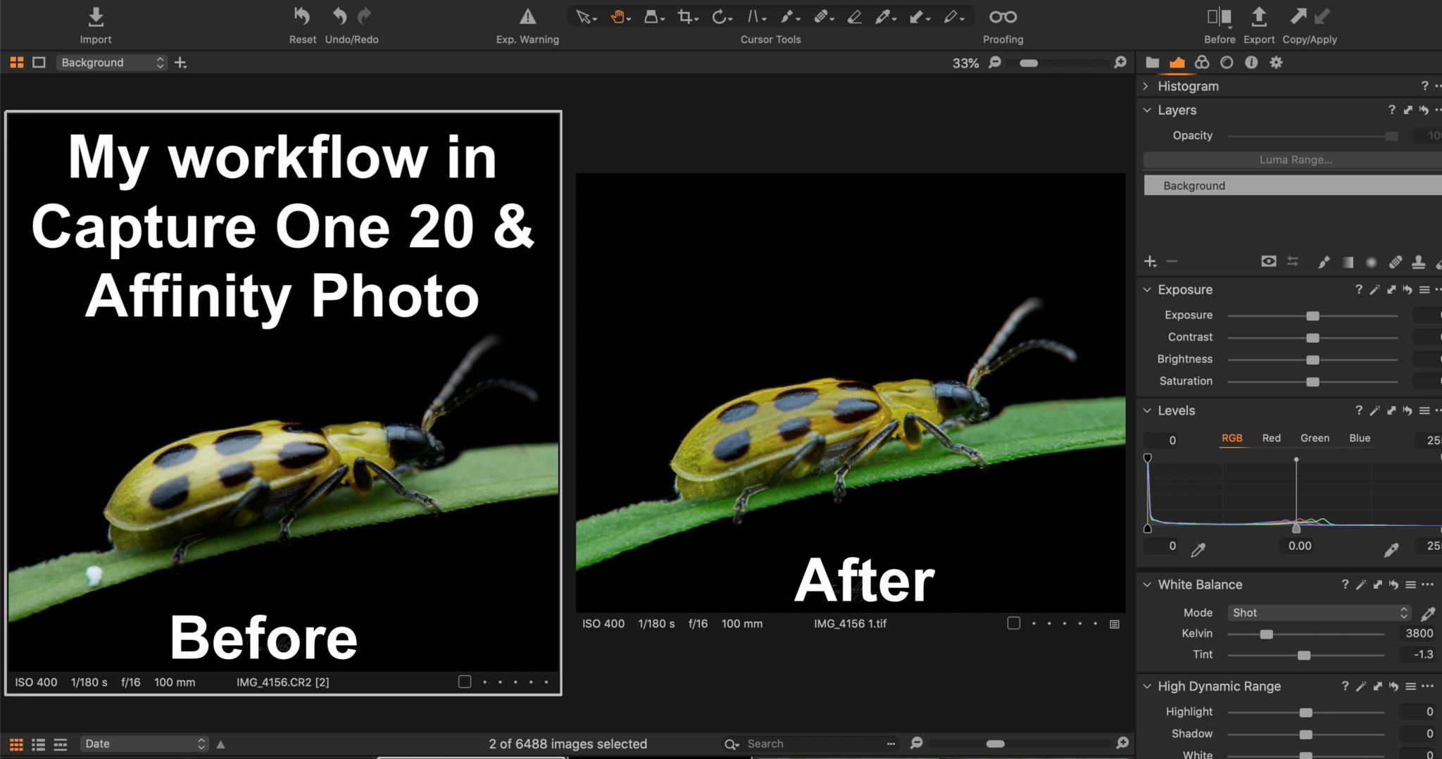 My photo editing workflow for macro